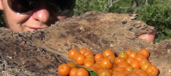 Foraging: Edible Plants