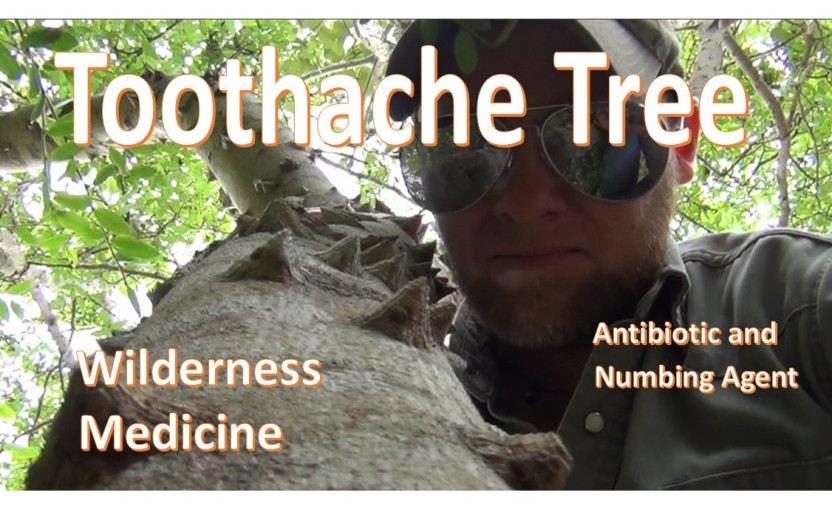 Wilderness First Aid -Local Anesthetic- and -Antibacterial-