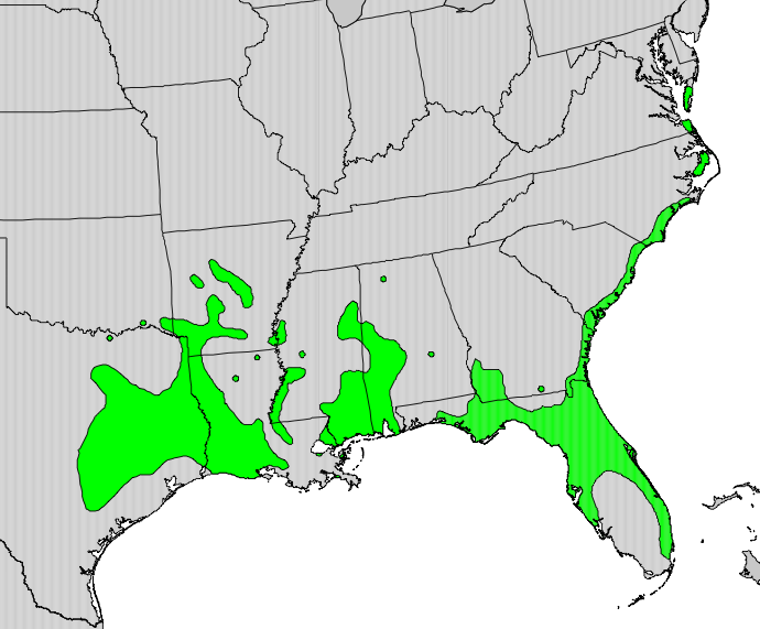 Range of the Toothache Tree