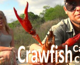Crawfish – Hand Caught / Fire Grilled